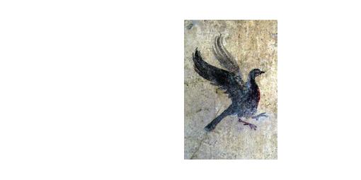 Oiseau Pompei