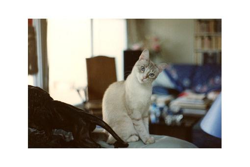 Virgule chatte d\'écrivain