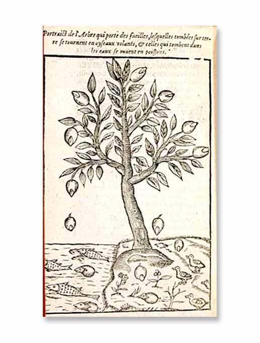 arbre_a_canards