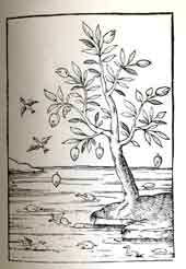 arbre_canards2_vignette