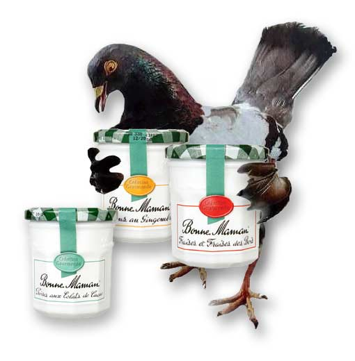 pigeon_bonne_maman